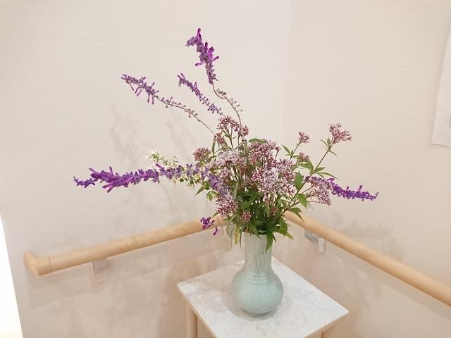 紫花2.JPG